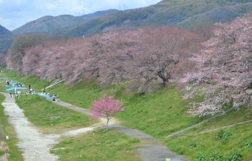 201204Kyoto_0421.jpg