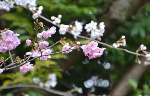201204Kyoto_0521.jpg