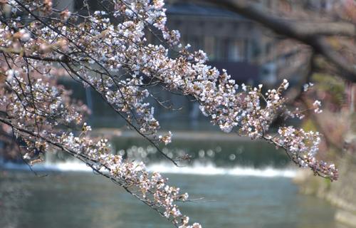 201204Kyoto_0639.jpg