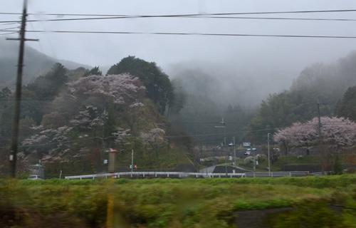 201204yoshino_0910.jpg