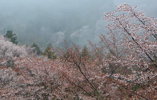 201204yoshino_1010.jpg
