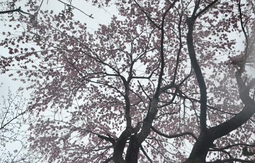 201204yoshino_1017.jpg