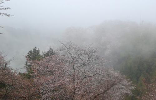 201204yoshino_1018.jpg