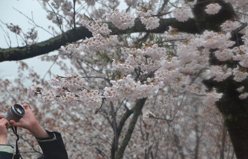 201204yoshino_1025.jpg