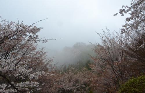 201204yoshino_1026.jpg