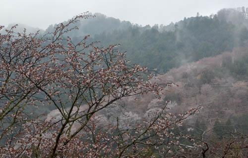 201204yoshino_1042.jpg
