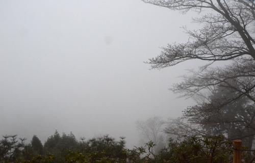 201204yoshino_1060.jpg