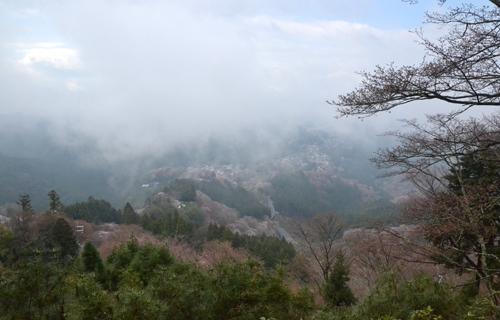 201204yoshino_1065.jpg