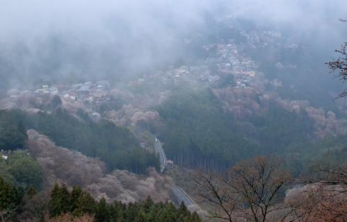 201204yoshino_1066.jpg