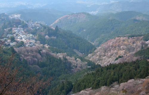201204yoshino_1087.jpg