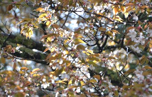 201204yoshino_1128.jpg