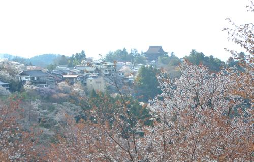 201204yoshino_1130.jpg