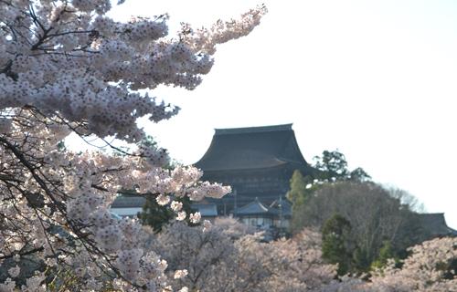 201204yoshino_1180.jpg