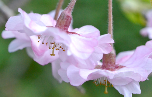 201204yoshino_1209.jpg