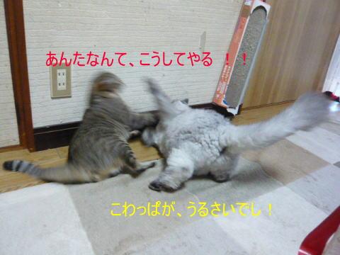 neko1_1.jpg