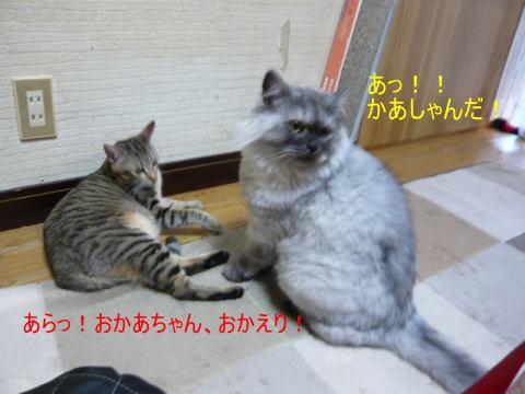 neko4_1.jpg
