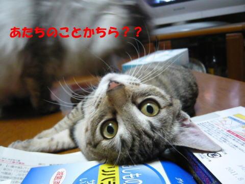 totto044_1.jpg