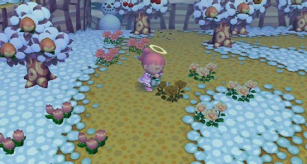 ピンク花栽培