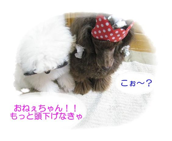 IMG_8376.jpg