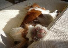 なだれ寝の足
