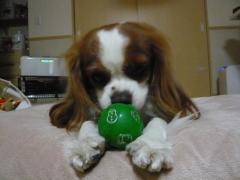 ボールは食べられないね。