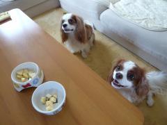 リンゴ食べよう