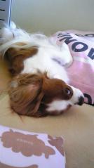寝てるの!!