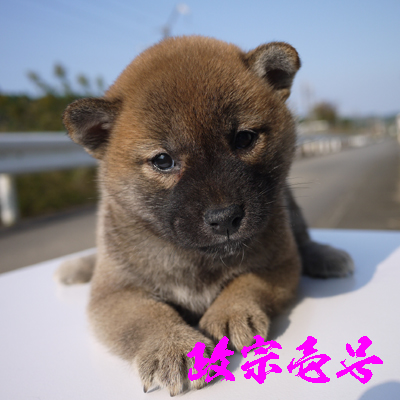 masamune1gou1114.jpg