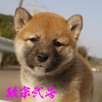 masamune2gou1114.jpg