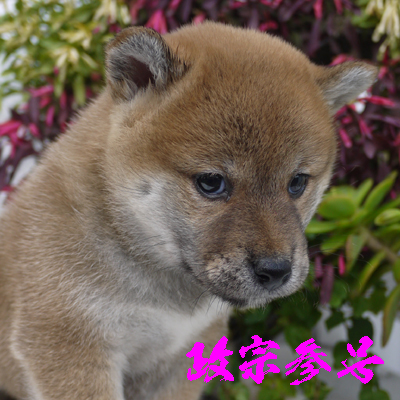 masamune3gou1114.jpg