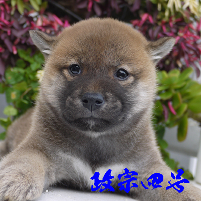 masamune4gou1114.jpg