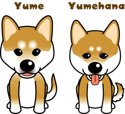 yume_yumeh.jpg
