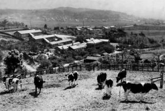 天白区の農場