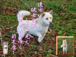 kanojyo.jpg