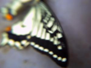 PICT0249.jpg