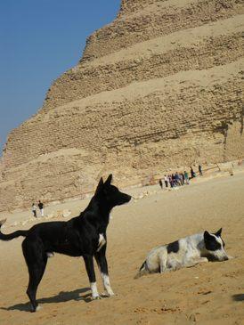 犬とピラミッド