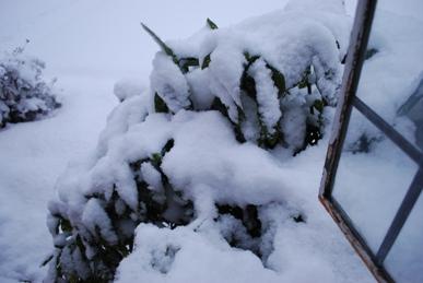 暮らし録用 雪