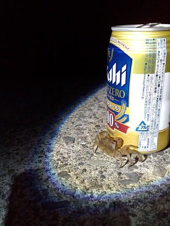 beer_crab.jpg