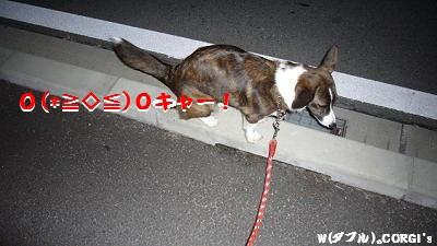2008121002.jpg
