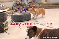 2008121310.jpg
