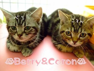 ベリー&コロン