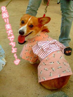 見返り美犬でち☆