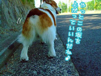 やっと坂道OK☆