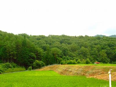 のどかな田園風景~