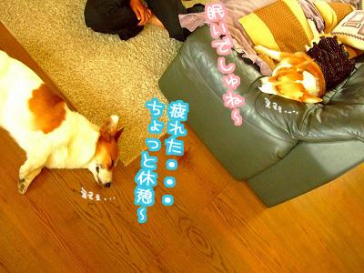 ひと休み~☆