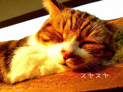 可愛い寝顔♪