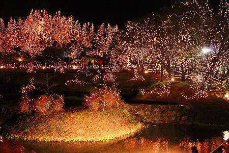 池に映る光