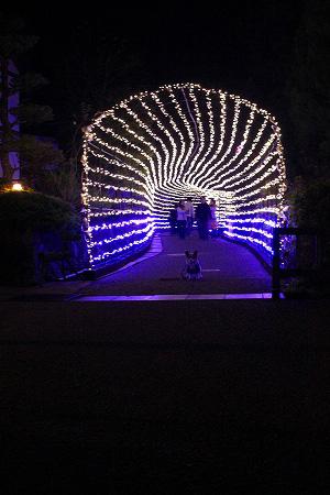 光のトンネル~
