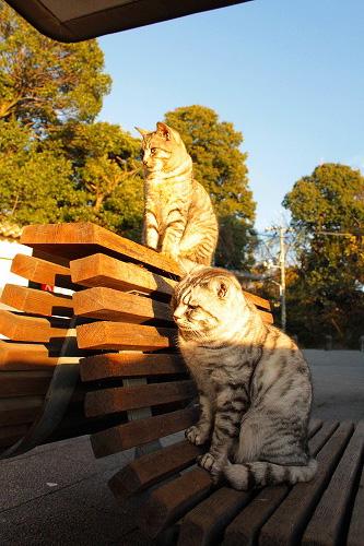 展望台のネコちゃん