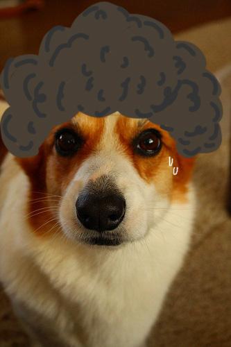 これは「アフロ犬」(笑)